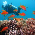 Scuba diving is one of the most popular water sports in Dubai